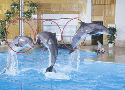 Särkänniemen delfiinit esiintyvät